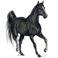 Riding Horse Arabian Horse Fleabitten Gray