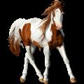 Horse KWPN Cremello