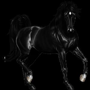 Pegasus Nokota Black Overo