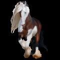Horse Lusitano Dun