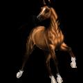 Horse Lusitano Dark Bay