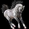 Riding Horse Lusitano Bay