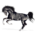 Unicorn Appaloosa Palomino Blanket