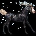 Unicorn Brumby Dun