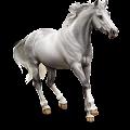 Horse Lipizzan Light Gray