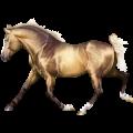 Pony Connemara Dun