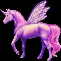 Winged unicorn Knabstrupper Bay Few Spots