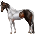 Riding Horse Paint Horse Black Tovero